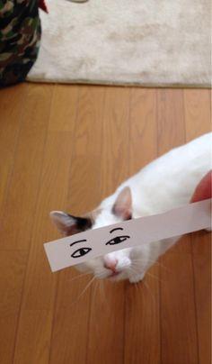 「猫の目」で遊ぶ猫モンタージュにTwitterユーザーが歓喜 - ライブドアニュース