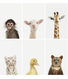 Nursery Art: Animal Prints - $25 and up from @Matty Chuah Animal Print Shop by Sharon Montrose Holiday Gift Guide: Baby