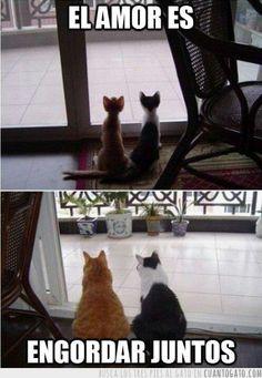 Gatos: el amor es engordar juntos.