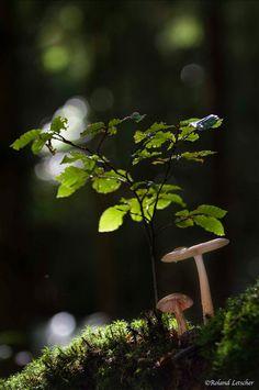 faerieforests: Un peu de lumière par Roland Letscher