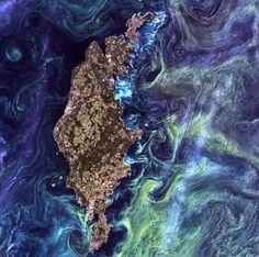 A satellite image of green phytoplankton swirling around the Swedish island #EarthAsArt #NASA