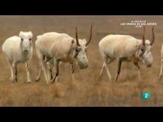El gran Cáucaso | Documentales Completos en Español - YouTube