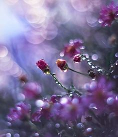 The dew gently kissed me on my forehead and in an instance I knew I was home . . .: )