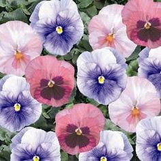 1000 Images About Flower Bed Palette On Pinterest