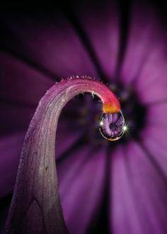 Macro & Light Painting by Stefano Moschini Dew Drops, Rain Drops, Purple Lilac, Shades Of Purple, Drops Of Jupiter, Water Drop Photography, Drip Drop, Fotografia Macro, Vand