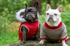Francesca and Sharkey love their new fall apparel #marthastewartpets #petsmart