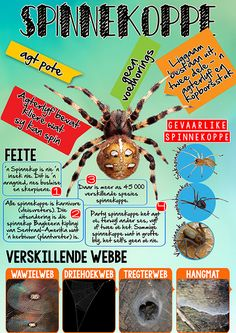 spinnekoppe hoezit infografika Home Schooling, Science Experiments, School Projects, Kids And Parenting, Kids Learning, Make It Simple, Homeschool, Afrikaans Quotes, Classroom