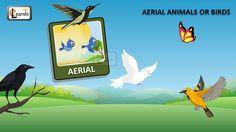Birds video for kids | Aerial Animals video for kid | Kindergarten learn...