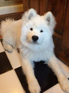 What a beautiful white puppy  I want