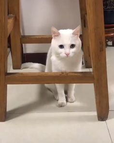 Funny Cats and Kittens Jump Meowing - Cats and Dogs - Cute Cat Gif, Cute Funny Animals, Cute Baby Animals, Animals And Pets, Cute Cats, Funny Cats, Kittens Cutest, Cats And Kittens, Kittens Meowing