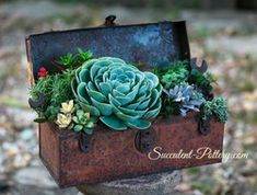 Breath taking!  Pre 1942 tool box transformed into an amazing succulent planter.