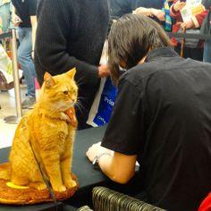 Bob supervises James @ book signing - from FB page James Bowen & Street Cat Bob