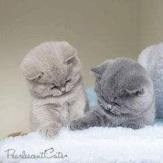 These cute kittens will bring you joy. Cats are wonderful creatures.