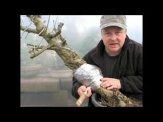 AIR LAYERING - Another word & method of Rooting Bonsai Techniques - Air Layering