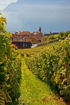 Vineyards in Lavaux