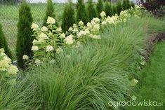 Ogród w Puszczykowie - strona 199 - Forum ogrodnicze - Ogrodowisko