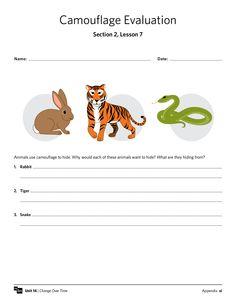 Camouflage Worksheet -- free MySci handout, #animals #adaptations #science #teaching