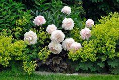 Garden Pots, Potted Garden, Backyard Plants, Coron, Ruiner, Landscape, Floral, Green, Flowers