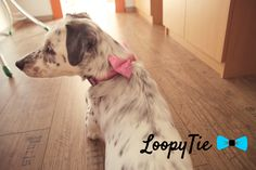 A glimpse of our new sewing room, where all our handmade collars and leashes are made.