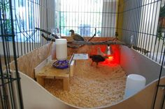 Dog Crate Chick Brooder  (BYC post showing several good ideas using dog crates & kennels for brooding chicks.)