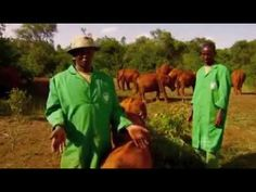 ▶ For the Love of Elephants PART 1- David Sheldrick Wildlife Trust - YouTube  MUST WATCH ALL OF THEM