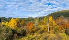 A Beautiful Autumn Day - Beautiful autumn colors in a forest in western Norway. Autumn Day, Beautiful Images, Norway, Westerns, Landscapes, Colors, Travel, Outdoor, Paisajes