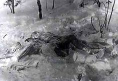 Two Bodies under Cedar under Dyatlov Pass.
