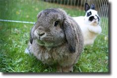 Types Of Rabbits | Rabbit Breeds