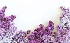 Digital Blooms Desktop Wallpaper 3 | June 2016 // JustineCelina.com x Rebecca Dawn Design