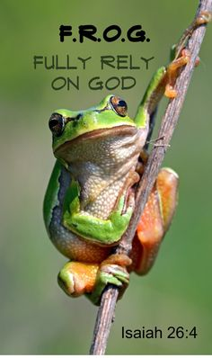 Frog Discover F. Fully Rely On God Frog On Stick Magnet Hot new product now available on our store Wholesale F. Check it out here! Funny Frogs, Cute Frogs, Frog Pictures, Animal Pictures, Frog Pics, Isaiah 26 4, Frog Quotes, Hump Day Humor, Bearded Dragon Diet