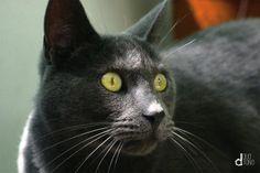 #cat #pet #animal #photo #foto #duotono
