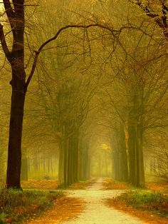 misty golden forest path