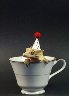 """Tequila says, """"Celebrating your stupid birthday is NOT my cup of tea. Also tea parties are LAAAAAAaaaaaam. Not My Cup Cute Lizard, Cute Gecko, Gecko Terrarium, Baby Skunks, Dark Green Aesthetic, Cat Doodle, Cute Reptiles, Crested Gecko, Wildstyle"""