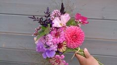 Bouquet with sweet pea, zinnia, herbs, cosmos, salvia and panicum grass.
