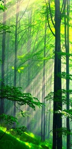 Illuminate in green ¤