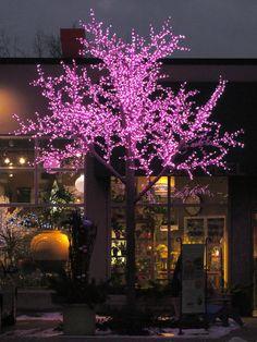 Arbre lumineux DEL devant notre boutique de la rue Peel à Montréal. http://www.alphaplantes.com/ #Alphaplantes #Noël #Christmas #Xmas #Arbre #Christmastree #Christmasholidays #Lumières #Lights #Rose #Hiver #Winter