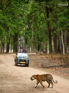 Tiger safari packages in india