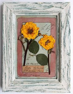 Pressed flowers framed 8x6 inches 205x155 cm  pressed