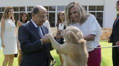 Lebanon gets first animal protection law to safeguard pets and wildlife