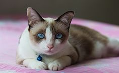 Cats, Dogs, and Other Animals Can See Beyond Human Perception | petMD