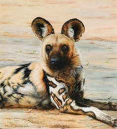 AFRICAN WILD DOG PAINTINGS | painted dog african wild dog from a recent trip acrylic