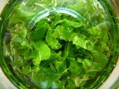 Lettuce, Preserves, Spinach, Vegetables, Diy, Food, Preserve, Bricolage, Essen