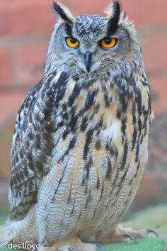 Little Owl, Owl Bird, Animal Totems, Birds Of Prey, Big Eyes, Bird Feathers, Art Pictures, Watercolor Art, Kitty