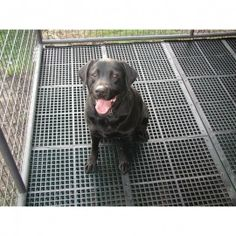 Best Cleaner For A Dog Kennel Floor