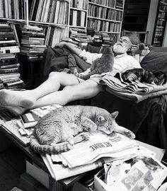 """Sono i gatti di Ernest Hemingway, che liberi e sereni ancora oggi abitano la casa che l'autore del """"Grande Gatsby"""" comprò a Key West, in Florida, nel 1928, per abitarvi con la sua seconda moglie Pauline Pfeiffer."""