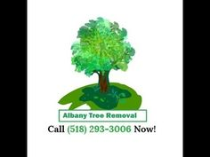 Albany Tree Removal's site is live!  The leading tree service in Albany, NY can handle any job big or small.  We do everything trees.  #trees #nature #treeservice #treeremoval #albany #ny #treecare