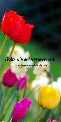 feliz dia de la primavera1 Frases Primavera Whatsapp Spring Is Here, Keto, Vegetables, Flowers, Plants, Food, Birthdays, Friends, Google