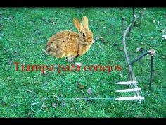 ABSsupervivencia: Trampa mortal para conejos