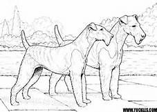 Airedale Terrier Coloring Pages