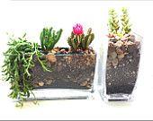 Set of Rectangular Vases with Succulent plants